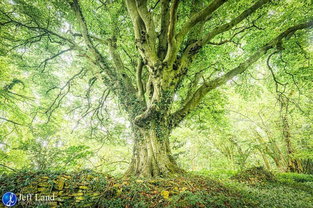 Ancient Oak, Landscape, Photographer, Stratford upon Avon, Warwickshire, Cotswolds