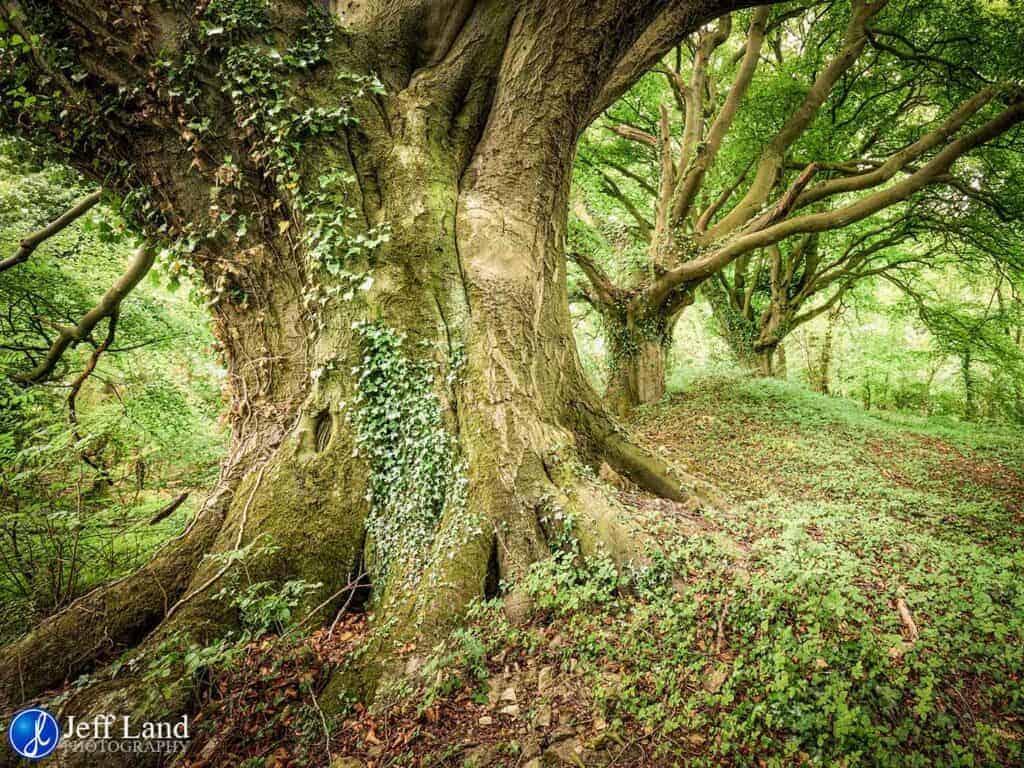 Ancient Oak Trees, Landscape, Photographer, Stratford upon Avon, Warwickshire, Cotswolds