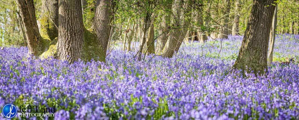 Bluebell, Landscape, Photographer, Stratford upon Avon, Warwickshire, Cotswolds