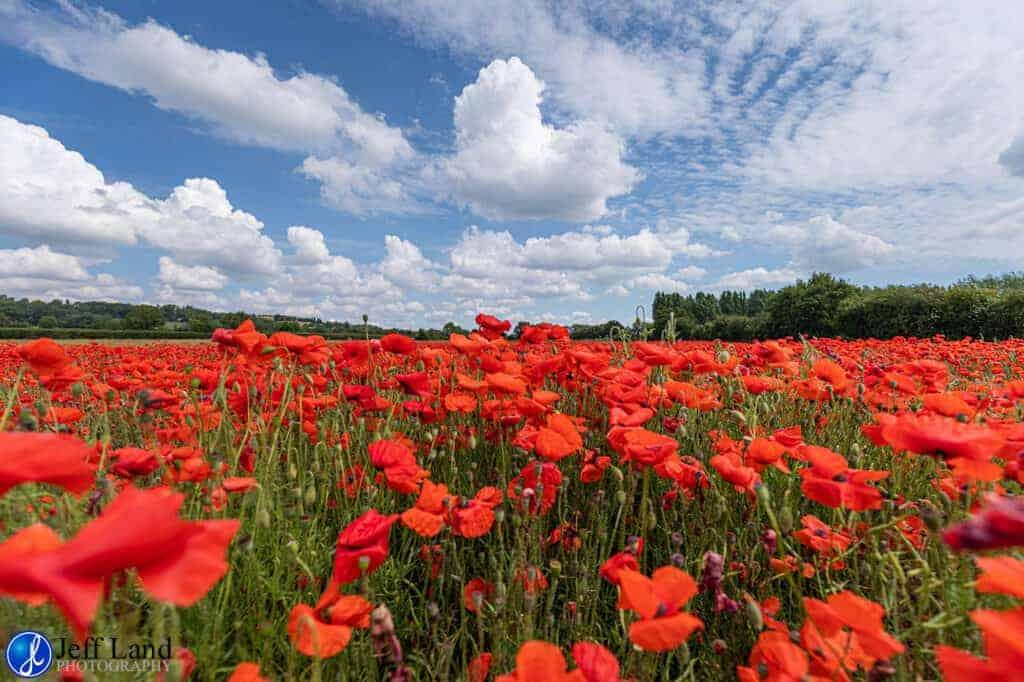 Poppy Field, Landscape, Photographer, Stratford upon Avon, Warwickshire, Cotswolds