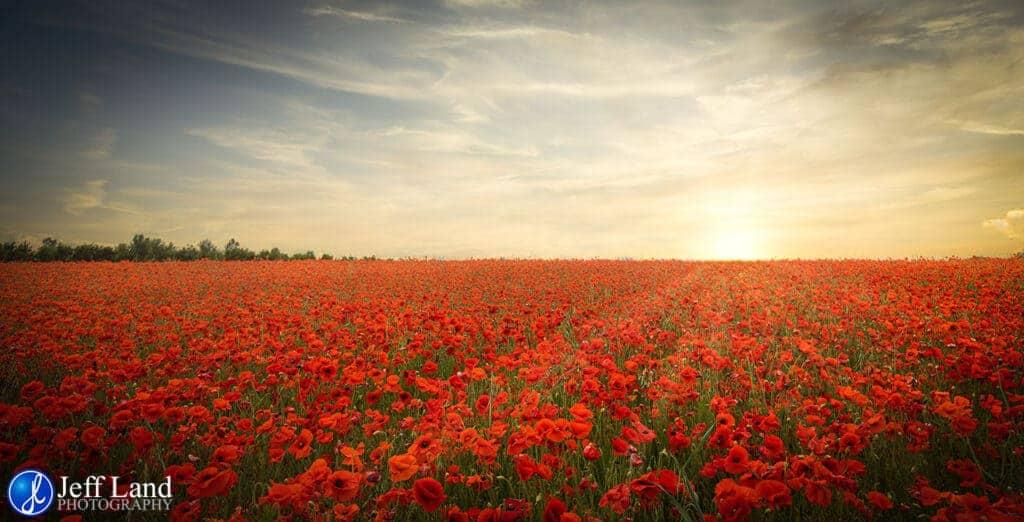 Poppy Field, Sunset, Landscape, Photographer, Stratford upon Avon, Warwickshire, Cotswolds
