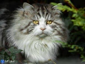 Cat, Pet Portrait Photographer, Stratford upon Avon, Warwickshire, Cotswolds