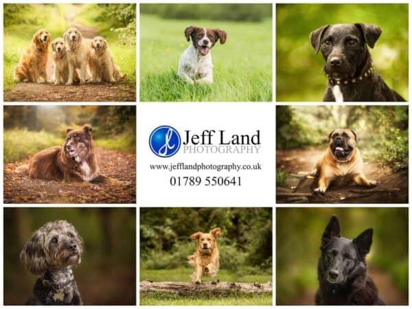 Pet Portrait Photographer, Stratford upon Avon, Warwickshire, Cotswolds