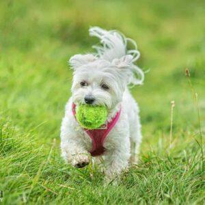 Small Dog, Pet Portrait Photographer, Stratford upon Avon, Warwickshire, Cotswolds