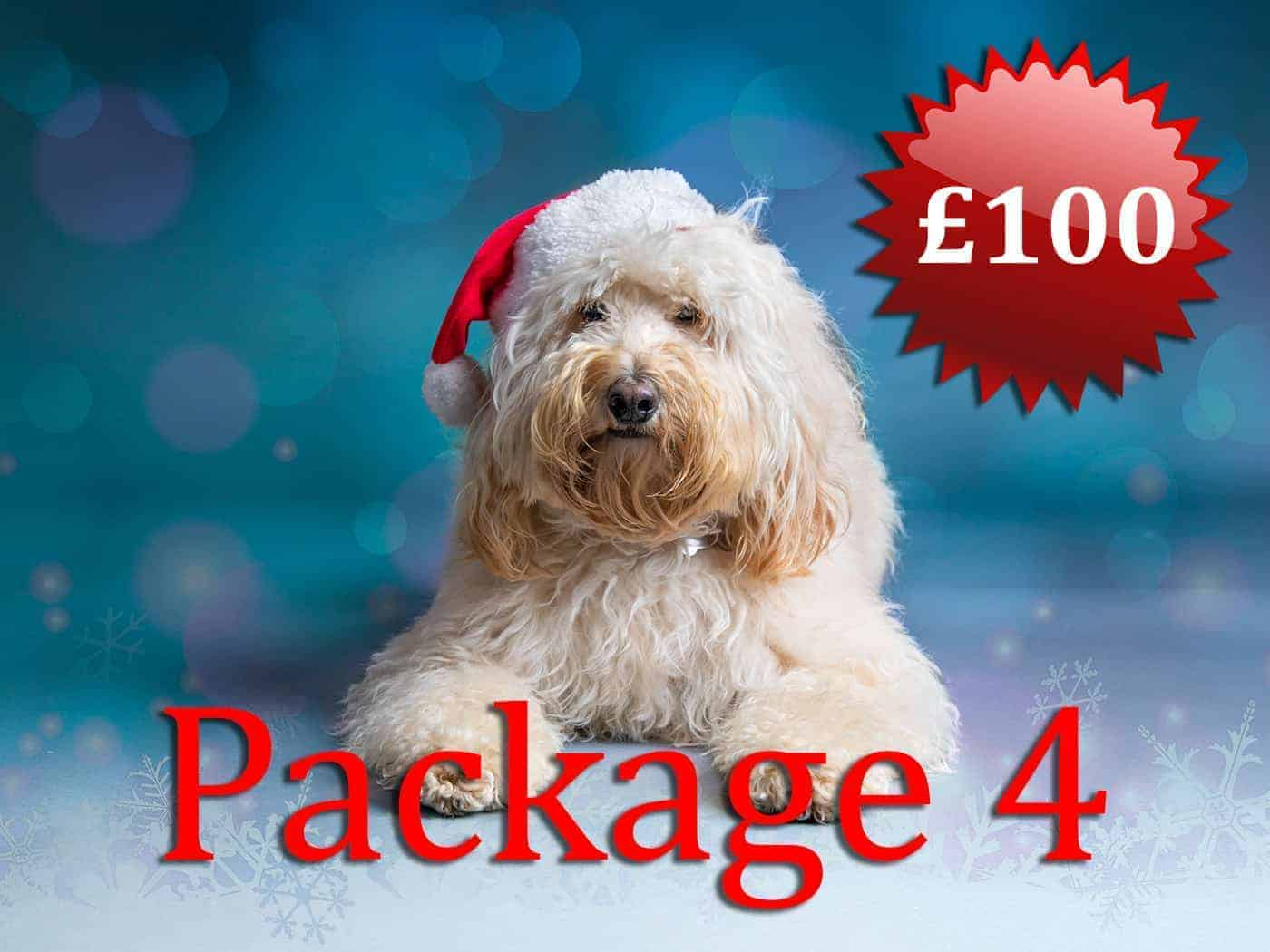 Christmas Dog Portrait £100