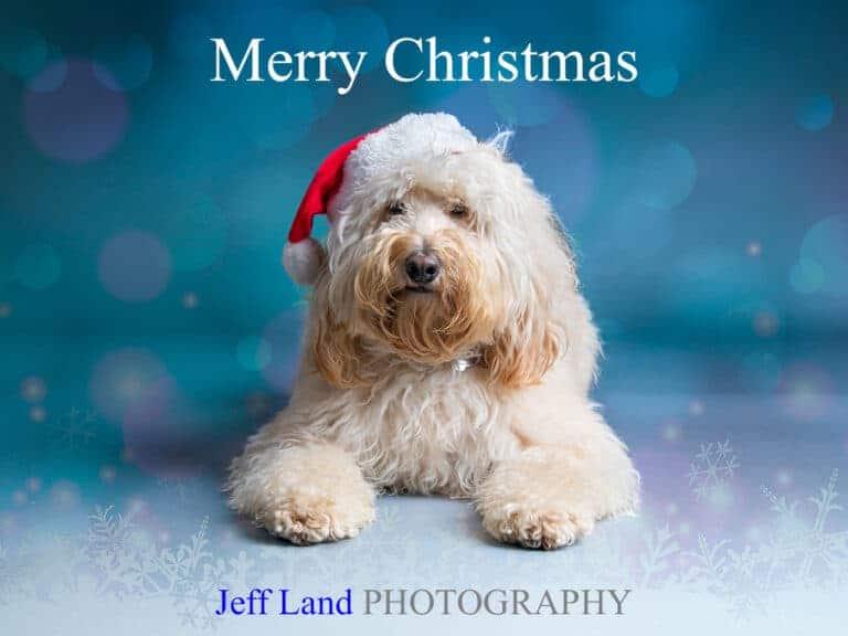 Christmas Themed Dog Studio Portrait Offer